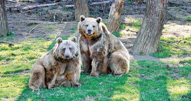 Bolu'da, vatandaşlar yaban hayvanlarına karşı uyarıldı